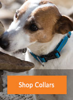 Cat and Dog Walking Collars