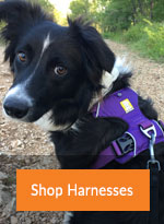 Cat and Dog Walking Harnesses