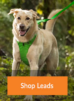 Cat and Dog Walking Leads